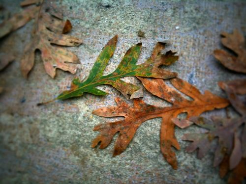 Leaves on stoop
