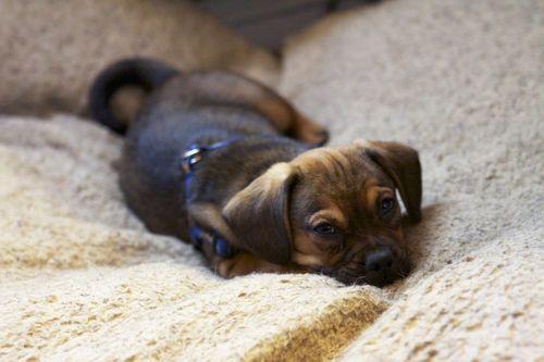 Hugo in a cutie